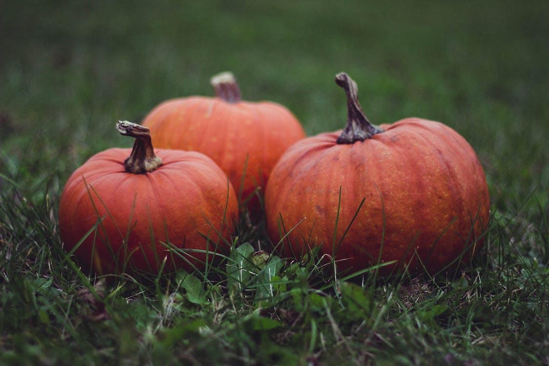 Three Pumpkins in Grass