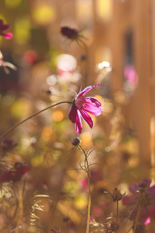 Foto profissional grátis de botões de flores, broto, flora, flores