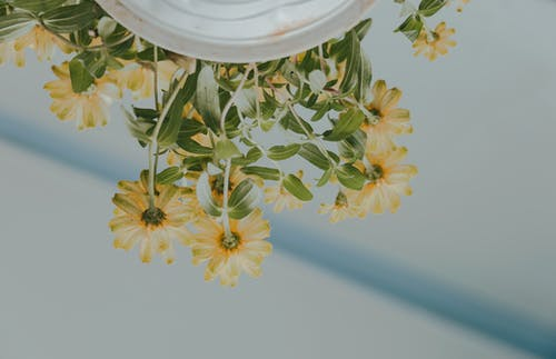Low Angle Photography of Petaled Flowers on White Ceramic Pot