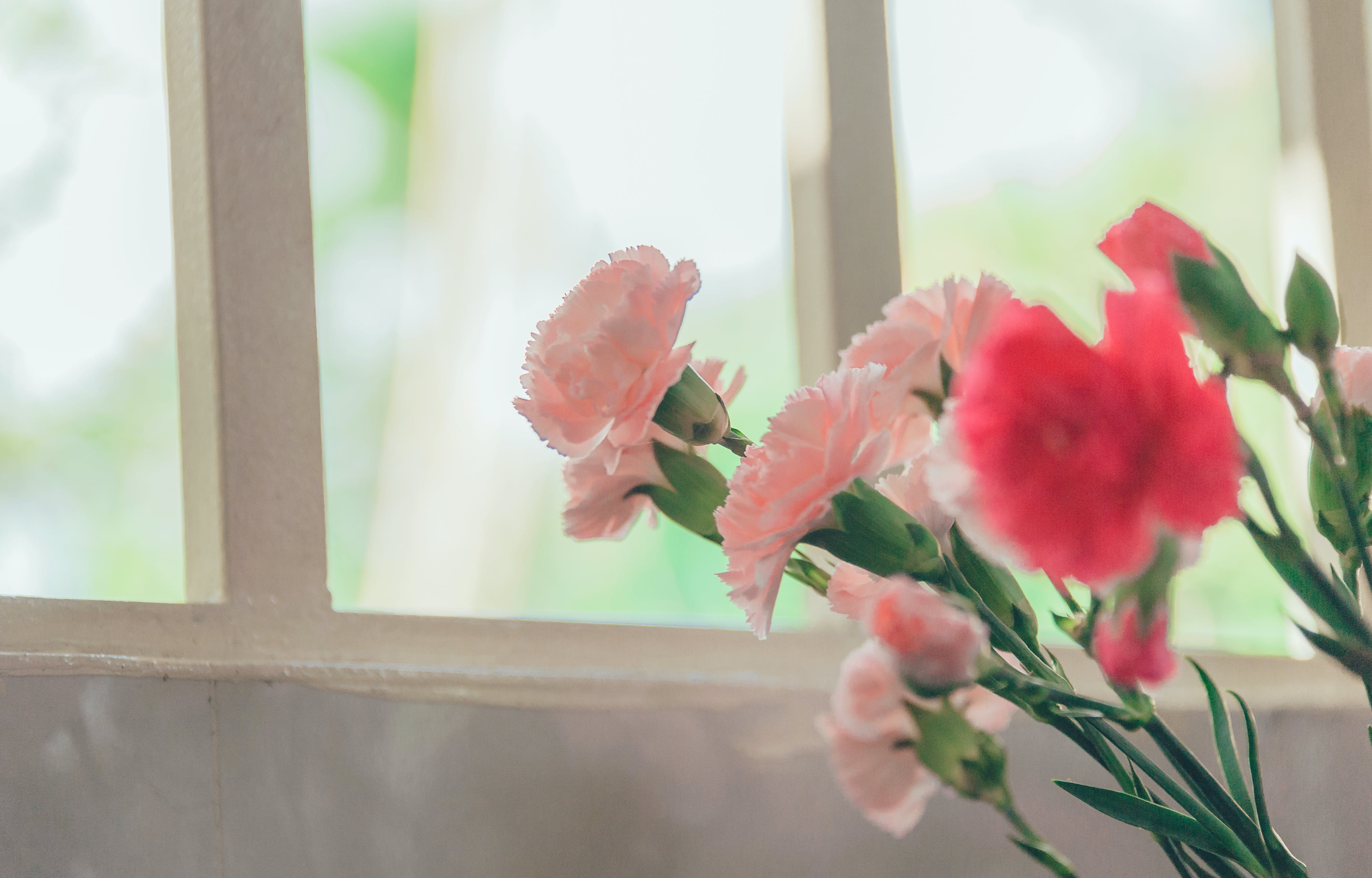 Pink Petaled Flower Near Glass Window