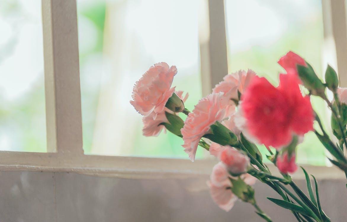 bukiet, delikatny, flora