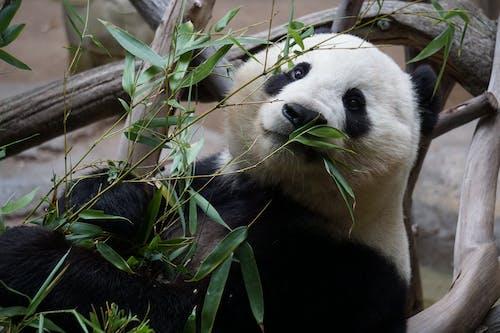 Fotos de stock gratuitas de animal, en peligro de extinción, fauna, joven