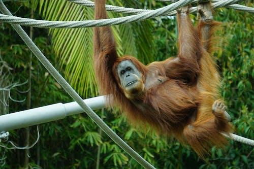 Fotos de stock gratuitas de al aire libre, animal, animal salvaje, árbol