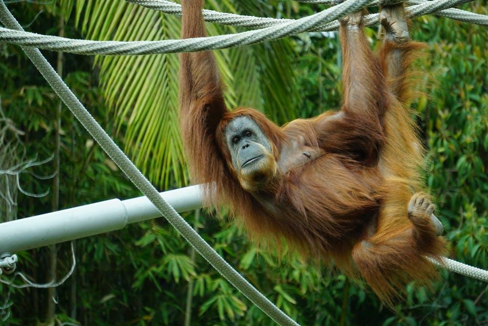 A monkey hanging on tree. | Photo: Pexels