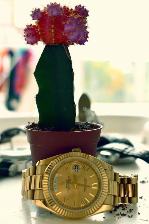 czas, kaktus, ostry