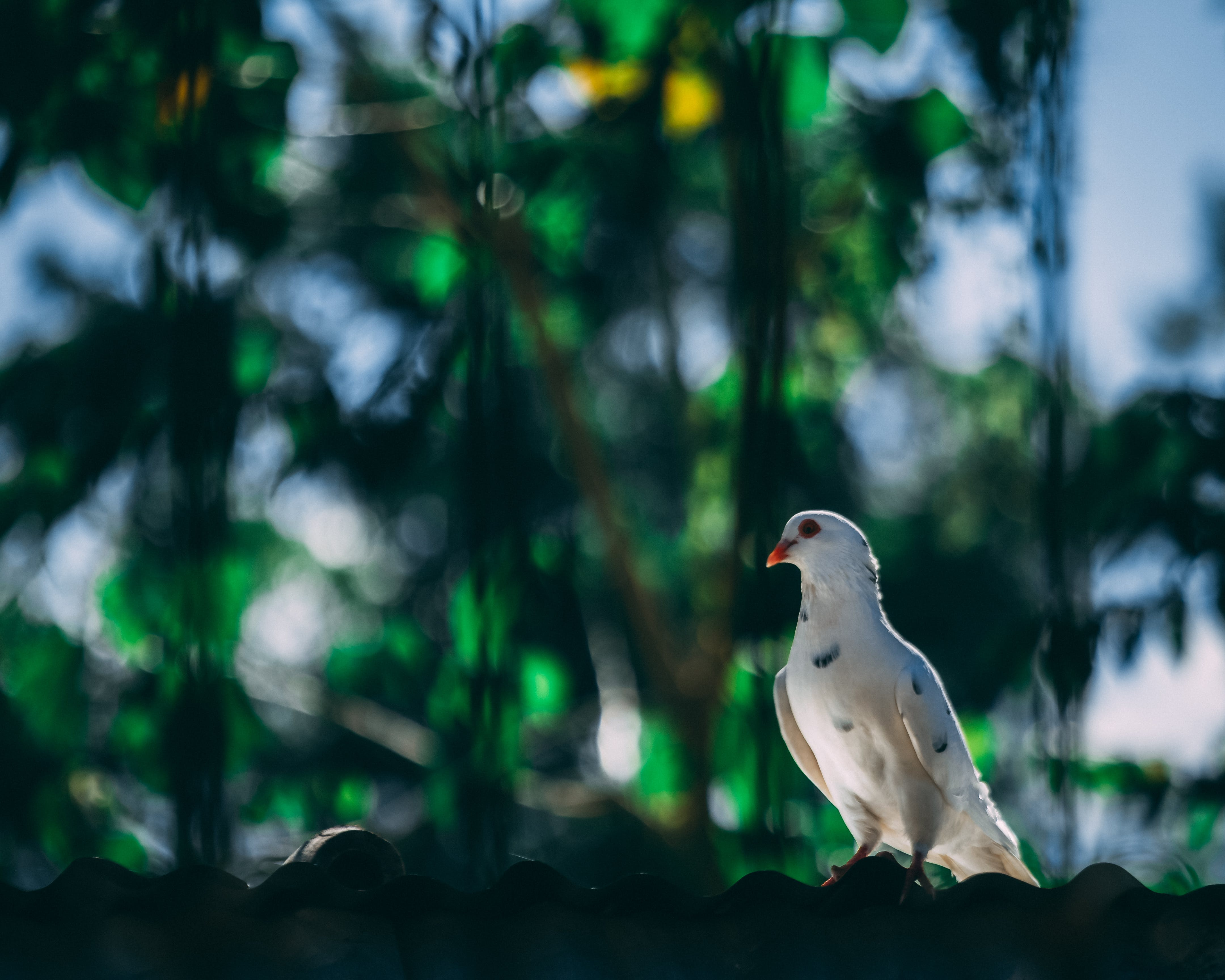 Kostenloses Stock Foto zu vogel, tier, verschwimmen, schnabel