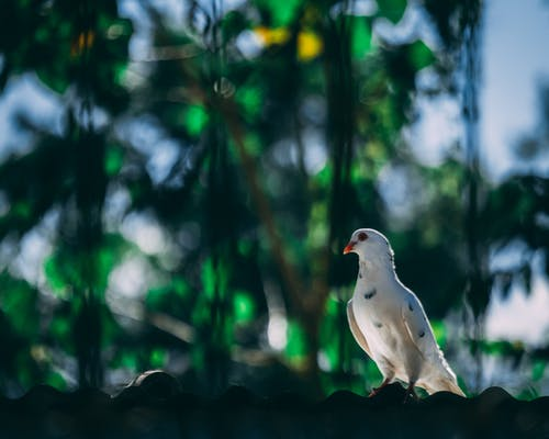 Foto profissional grátis de animal, ao ar livre, asas, ave