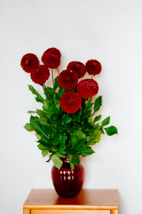 Foto d'estoc gratuïta de flora, florir, flors, gerro