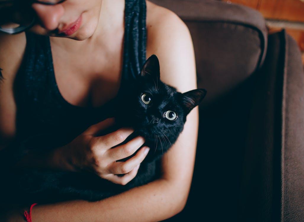 Persona Que Lleva Gato Negro