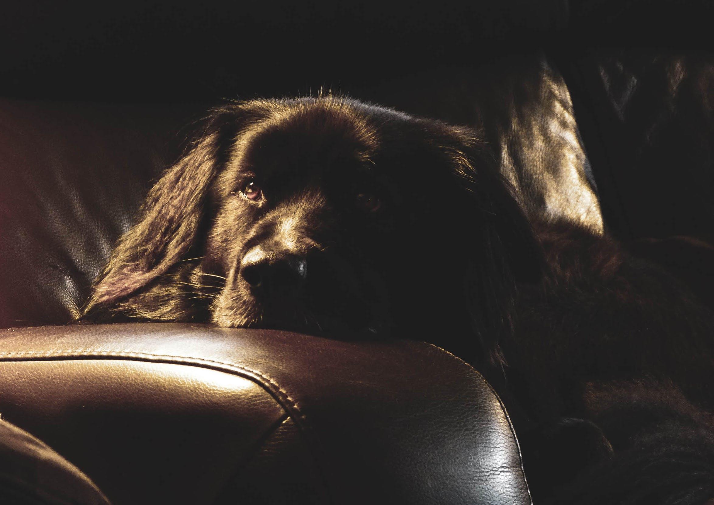 Free stock photo of black dog, dog, dogs