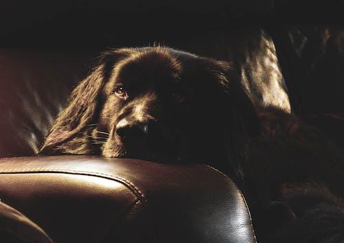 Ingyenes stockfotó fekete kutya, kutya, kutyák témában
