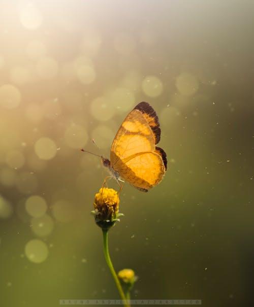 Fotobanka sbezplatnými fotkami na tému hmyz, kvet, makro, motýľ