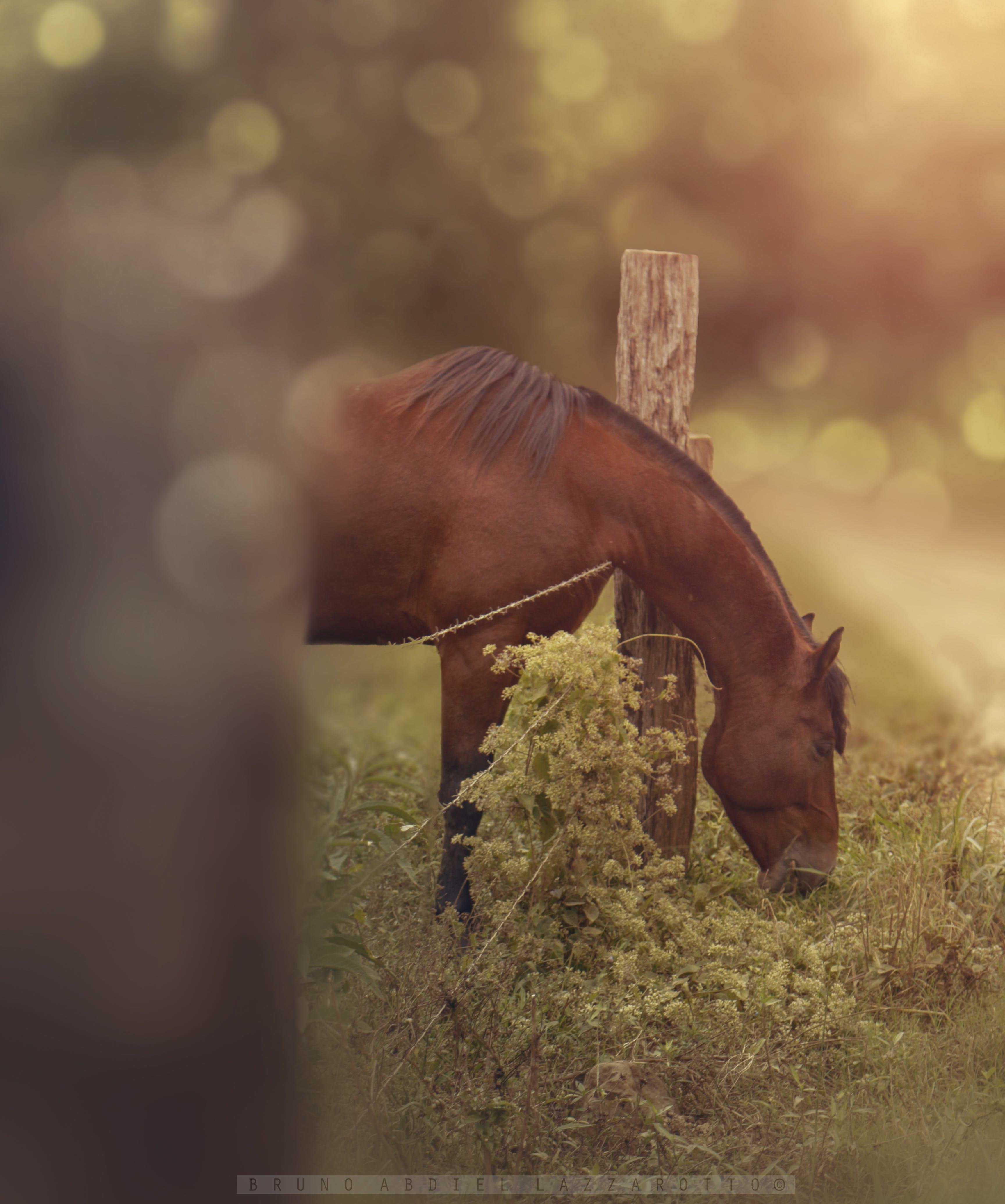 Kostenloses Stock Foto zu bauernhof, pferd, tier