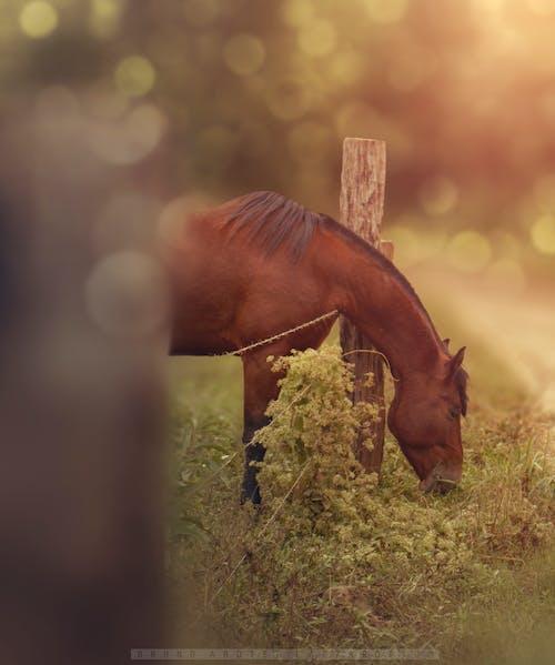 Безкоштовне стокове фото на тему «кінь, тварина, ферма»