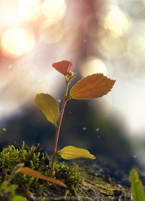 Безкоштовне стокове фото на тему «дерево, макрофотографія, план»