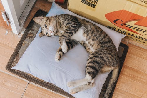 Brown Tabby Cat Lying on Grey Throw Pillow