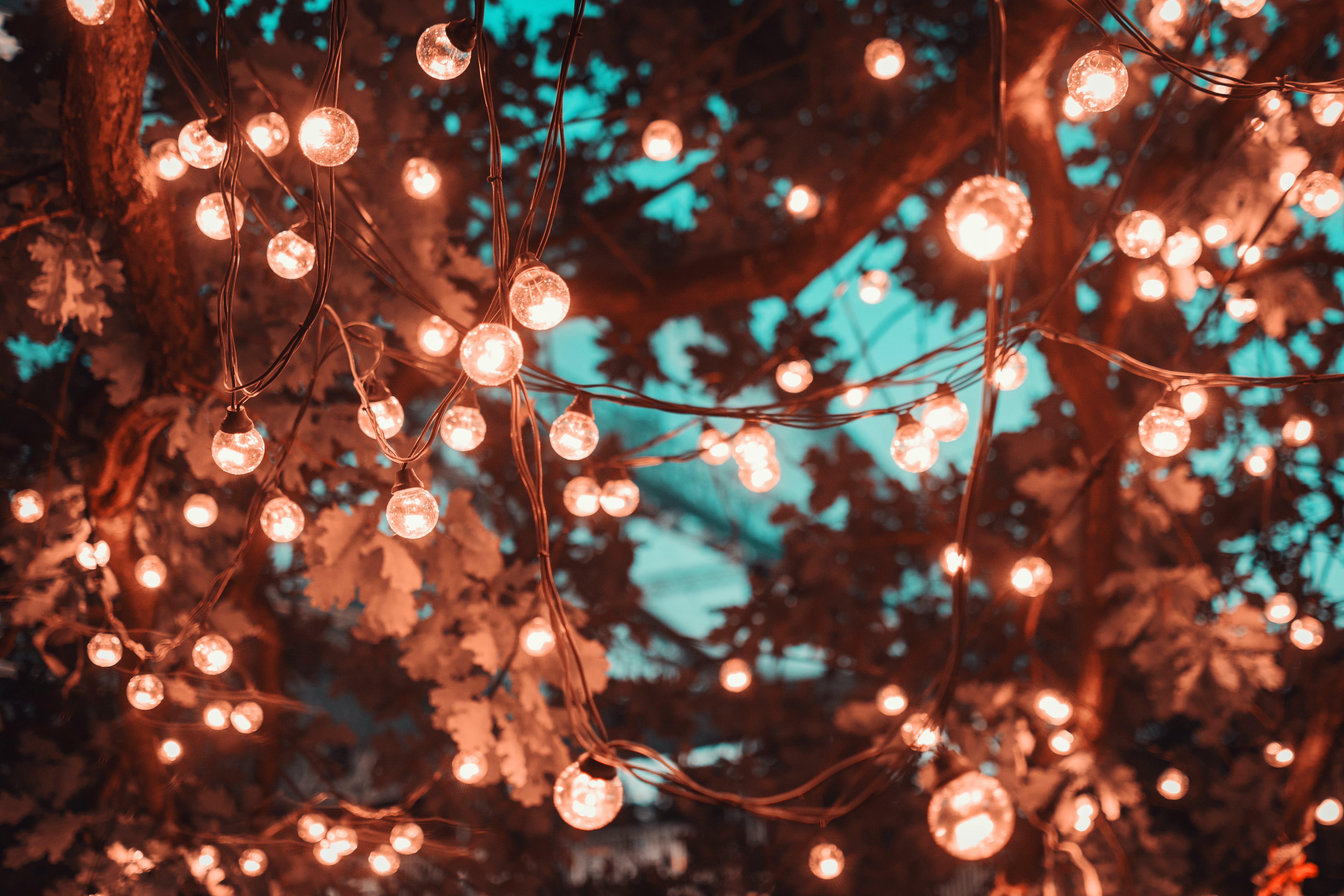 Brown String Lights in Tree
