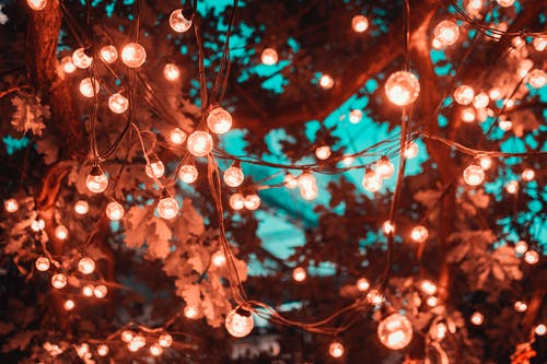 1000 Beautiful Fairy Lights Photos Pexels Free Stock Photos
