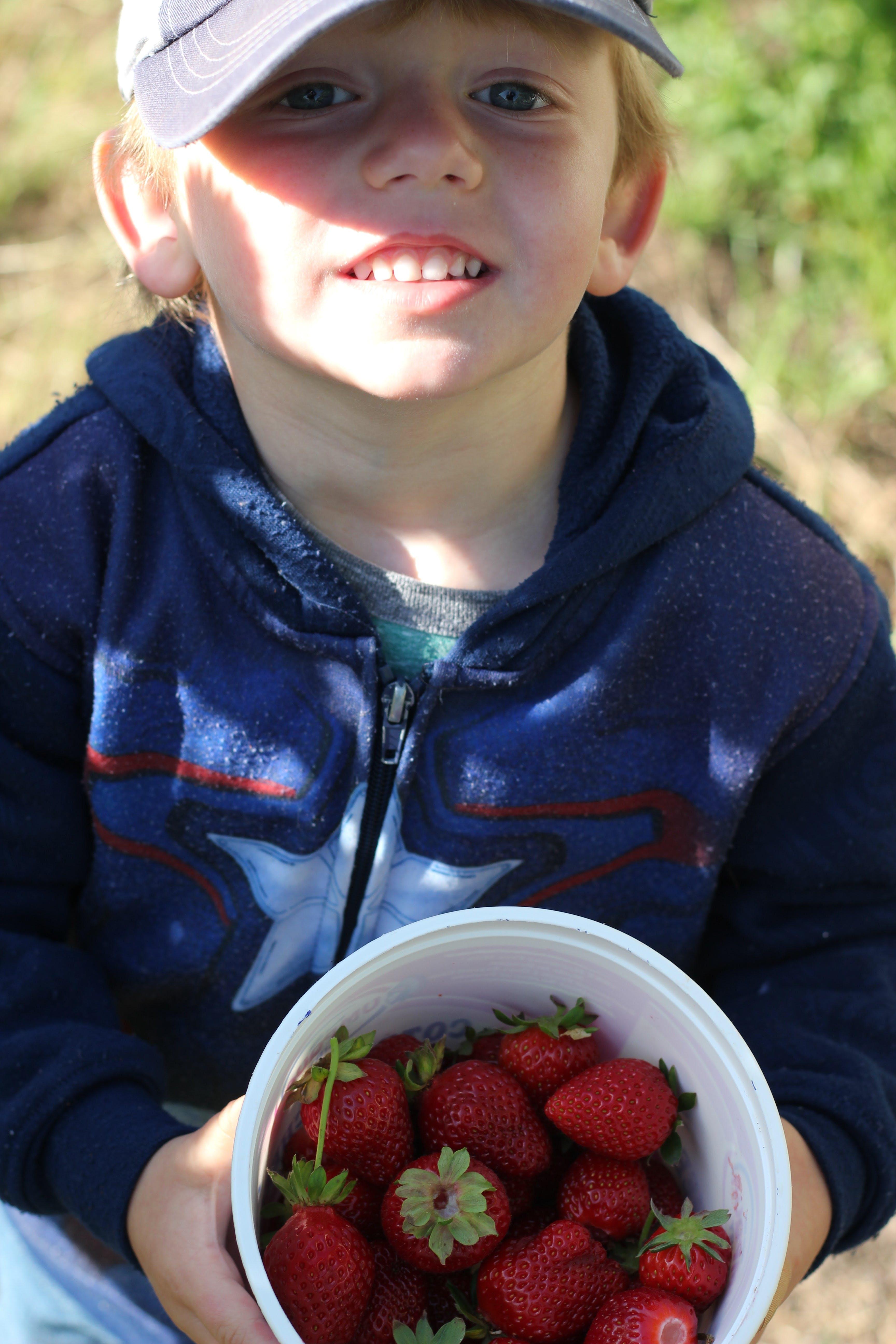 Free stock photo of boy, picking berries