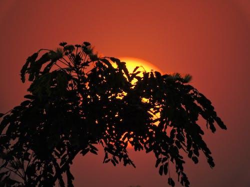 太陽, 日没, 木の無料の写真素材