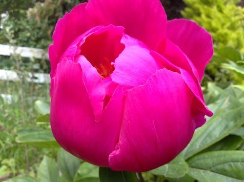 Безкоштовне стокове фото на тему «квітка»