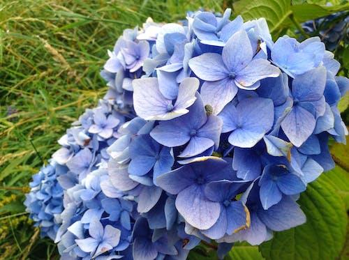 Fotos de stock gratuitas de fila de flores