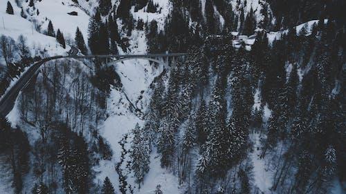 Kostenloses Stock Foto zu brücke, schnee, winter