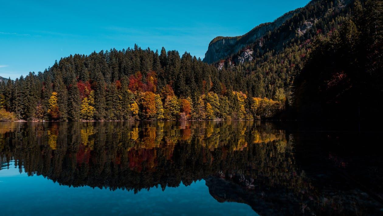 Δωρεάν στοκ φωτογραφιών με δασικός, δάσος