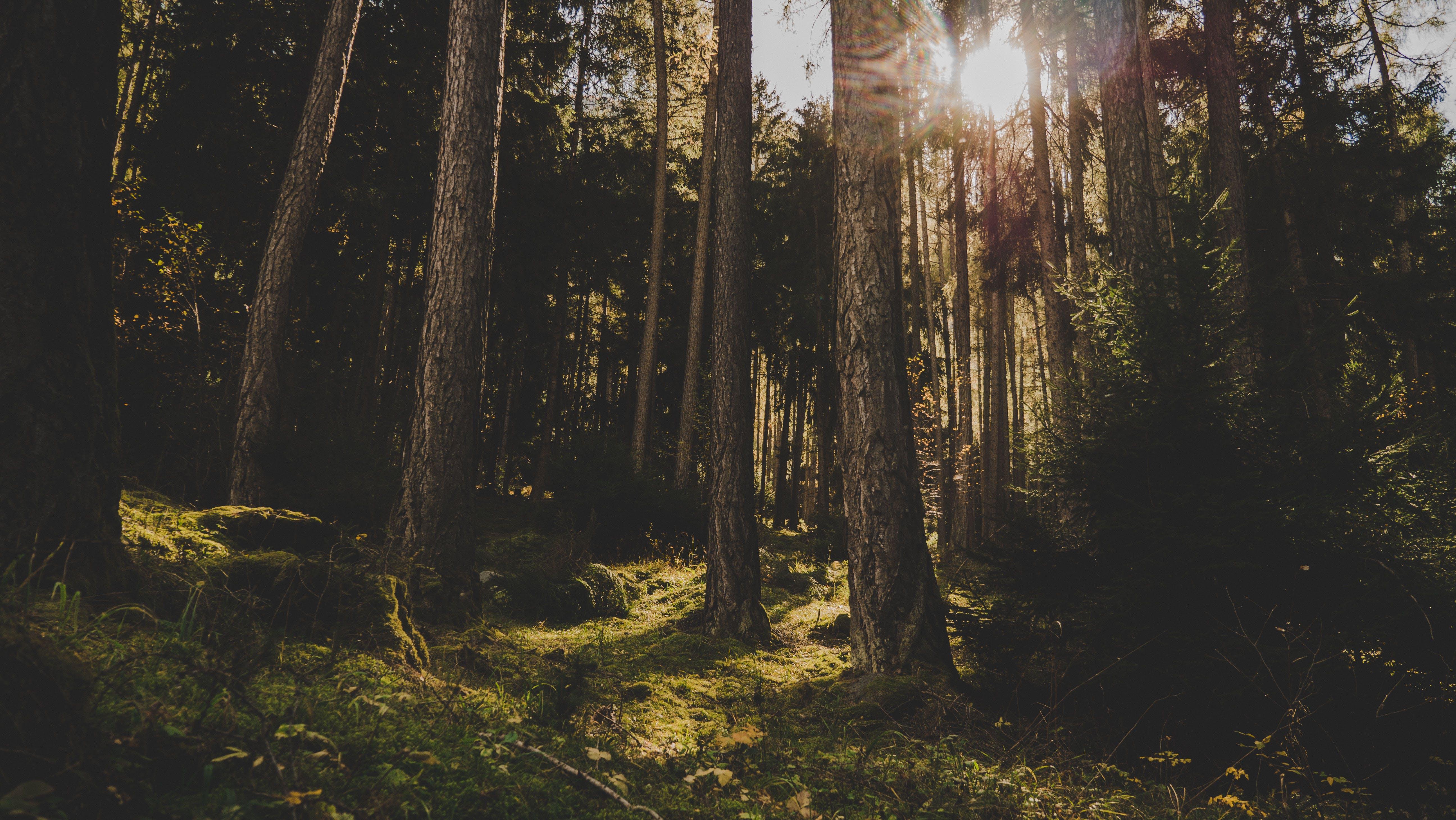 Безкоштовне стокове фото на тему «Денне світло, дерева, ліс, мальовничий»
