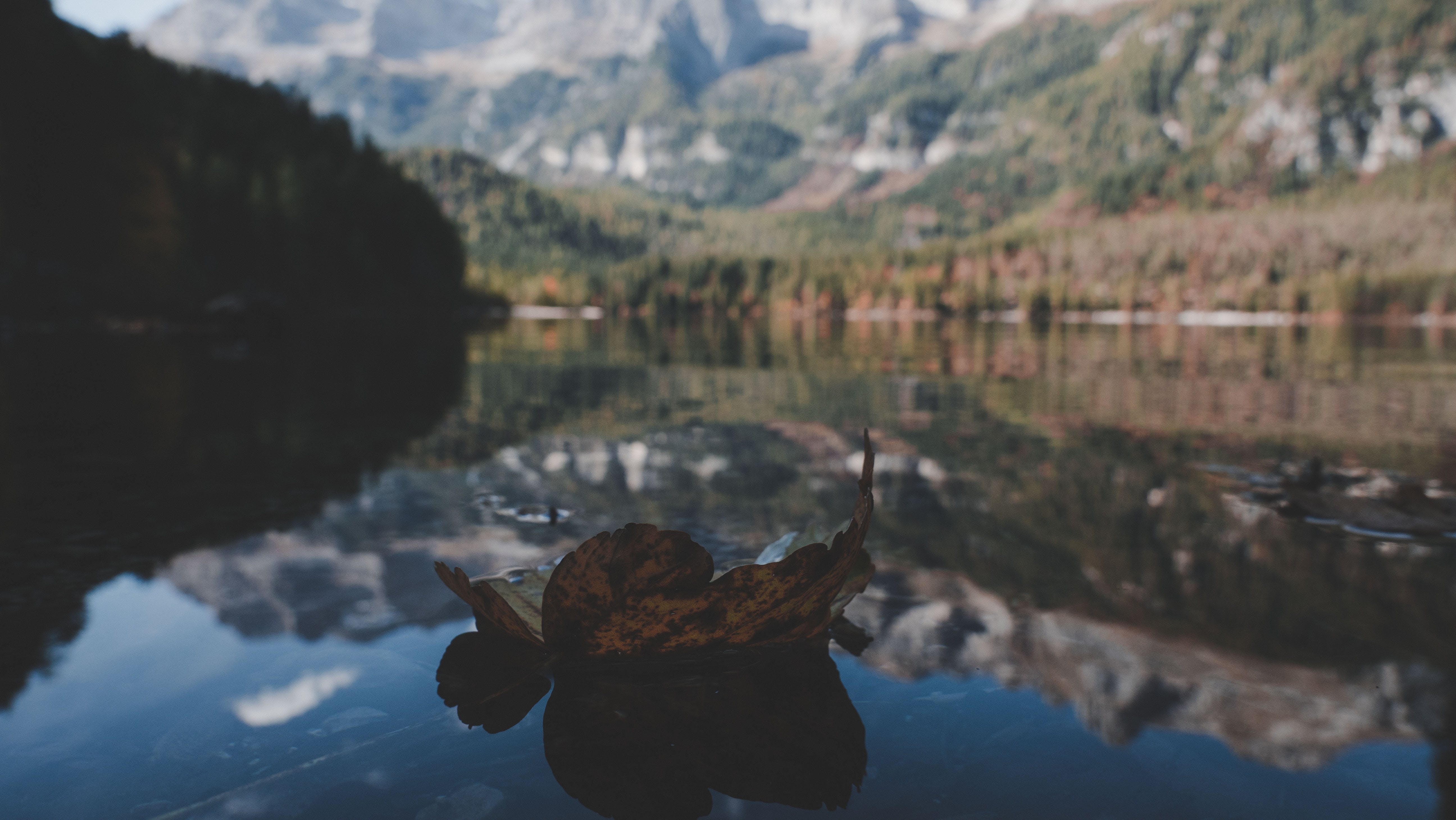 Withered Leaf On Water In Shallow Photography