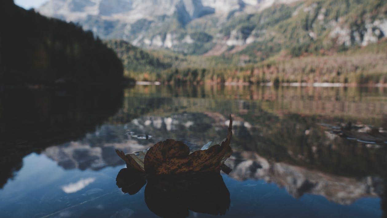 Gratis lagerfoto af bjerg, blad, dagslys