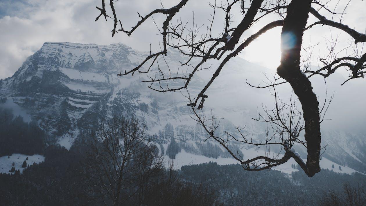 눈, 산의 무료 스톡 사진