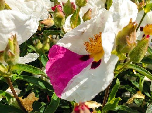 Fotos de stock gratuitas de flor, único