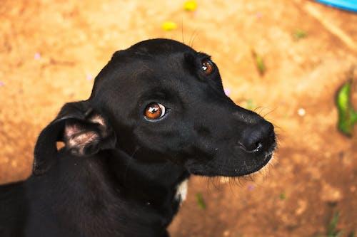 Foto stok gratis anjing, anjing hitam, bagus, binatang