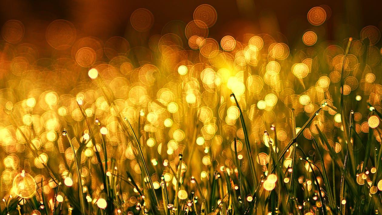 açık, alan, altın
