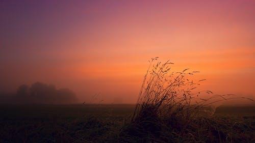 Fotos de stock gratuitas de campo, césped, colores, hora dorada