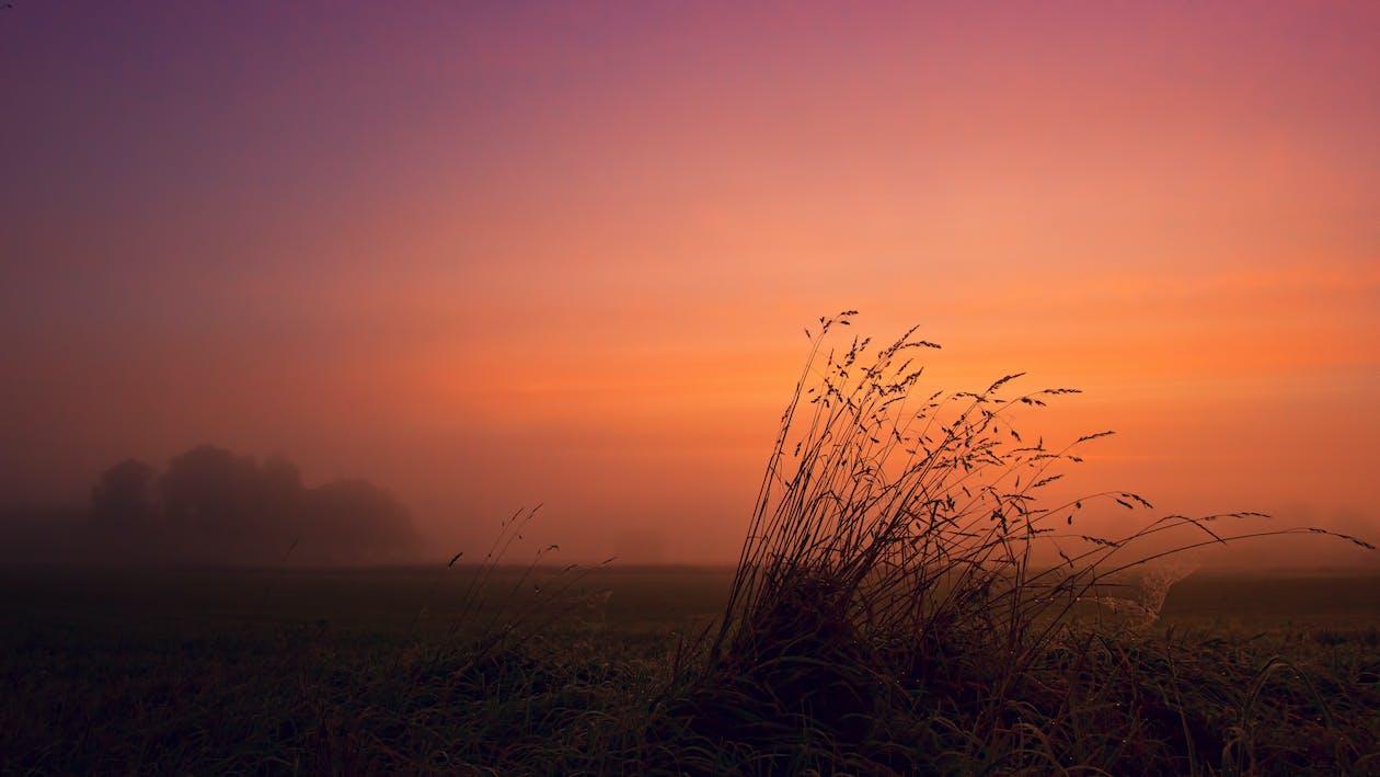 вечер, закат, пейзаж