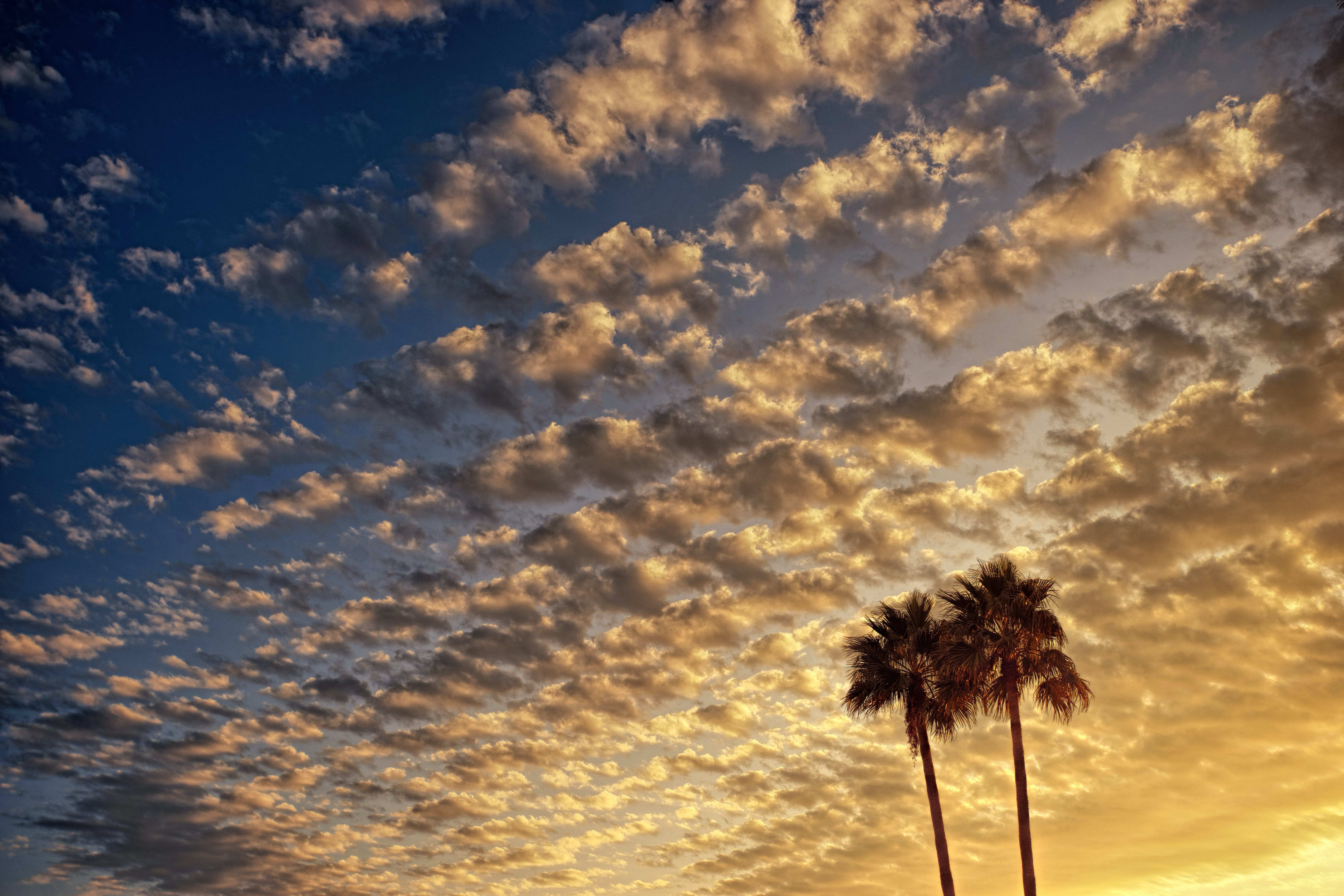 Low Angle Photography of Palm Tree Under Cloudy Sky during Golden Hour