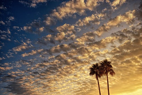 Kostenloses Stock Foto zu atmosphäre, bäume, goldene stunde, landschaft