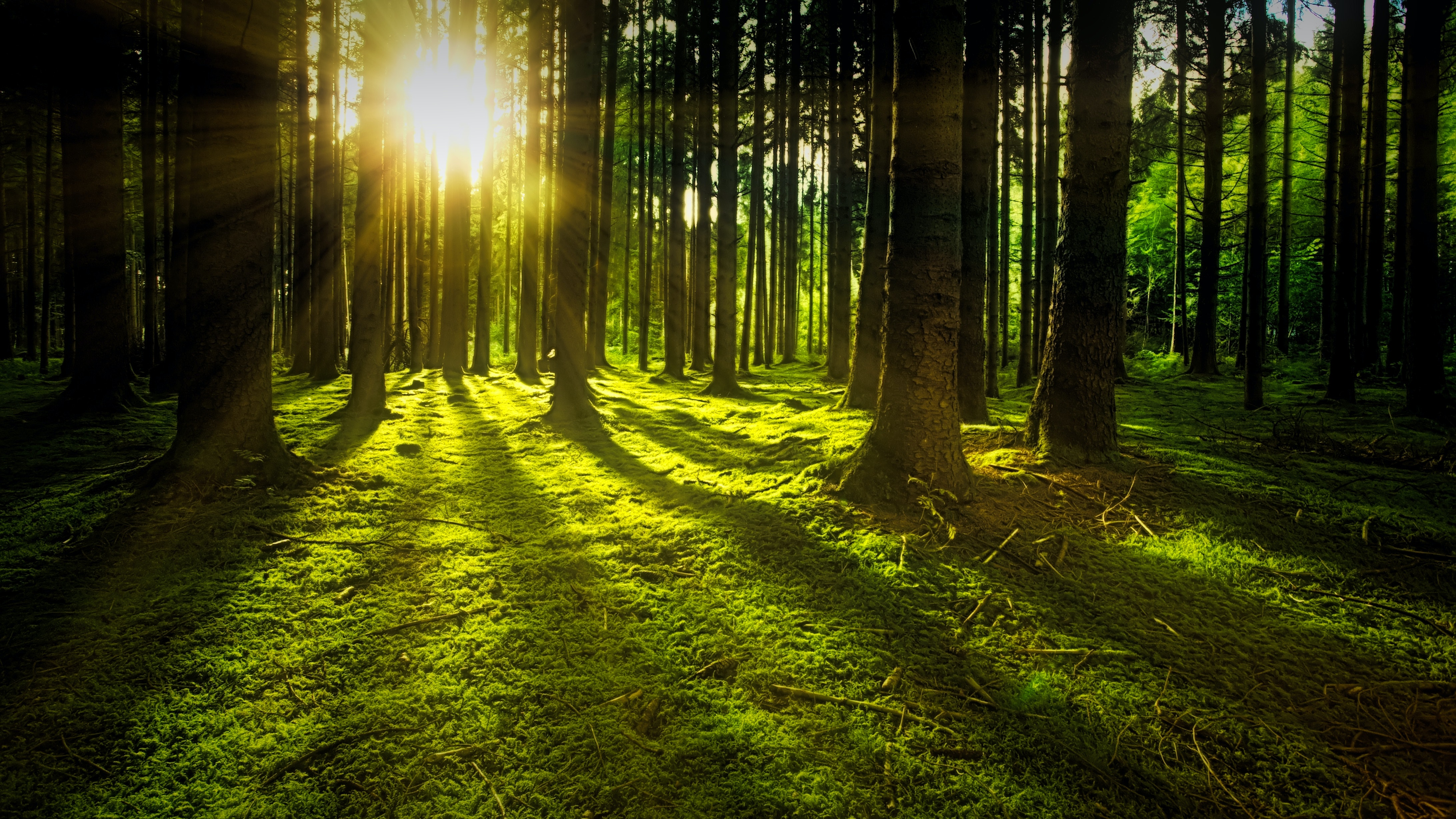 ray of sunlight flowing in trees  u00b7 free stock photo