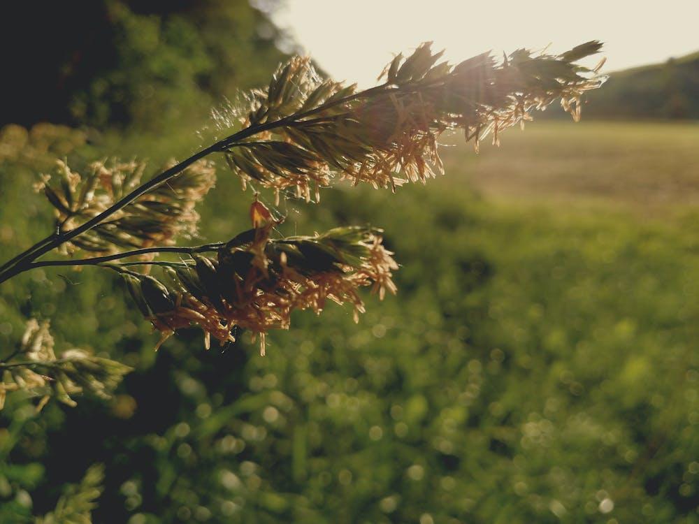 꽃, 녹색, 들판