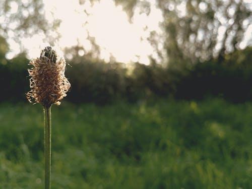 Gratis lagerfoto af eng, græs, grøn, makro