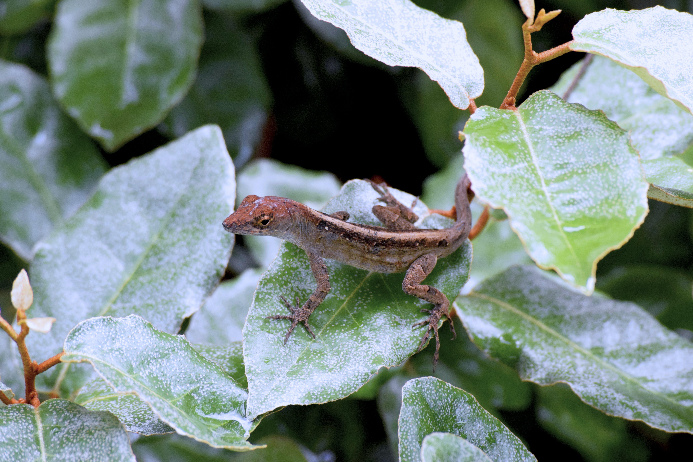 Free stock photo of animal, close-up, lizard, plant
