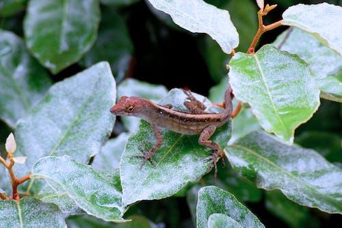 bitki, hayvan, kertenkele, yakından içeren Ücretsiz stok fotoğraf