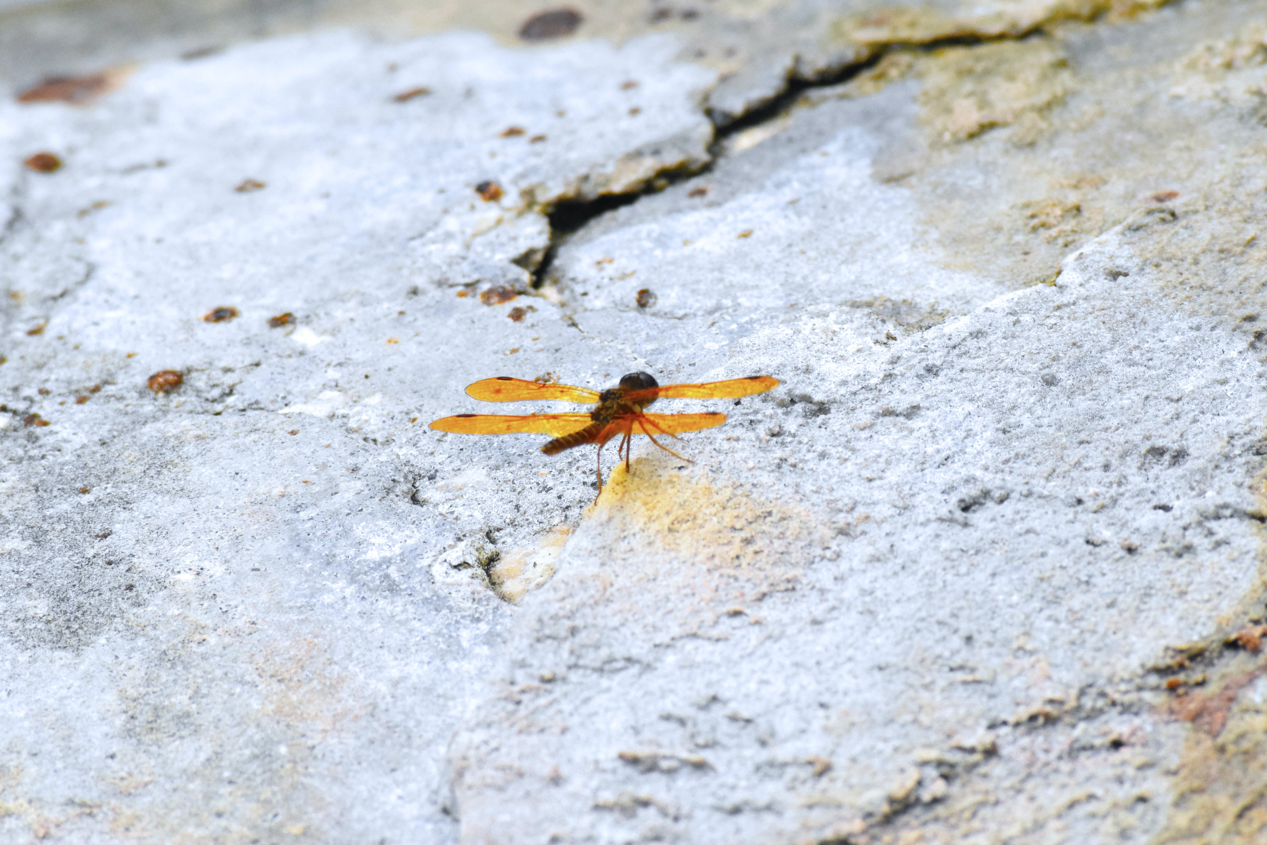 Free stock photo of animal, bug, cement, close-up