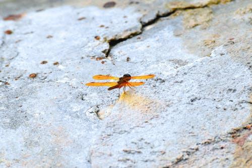 beton, böcek, bozulmak, çimento içeren Ücretsiz stok fotoğraf