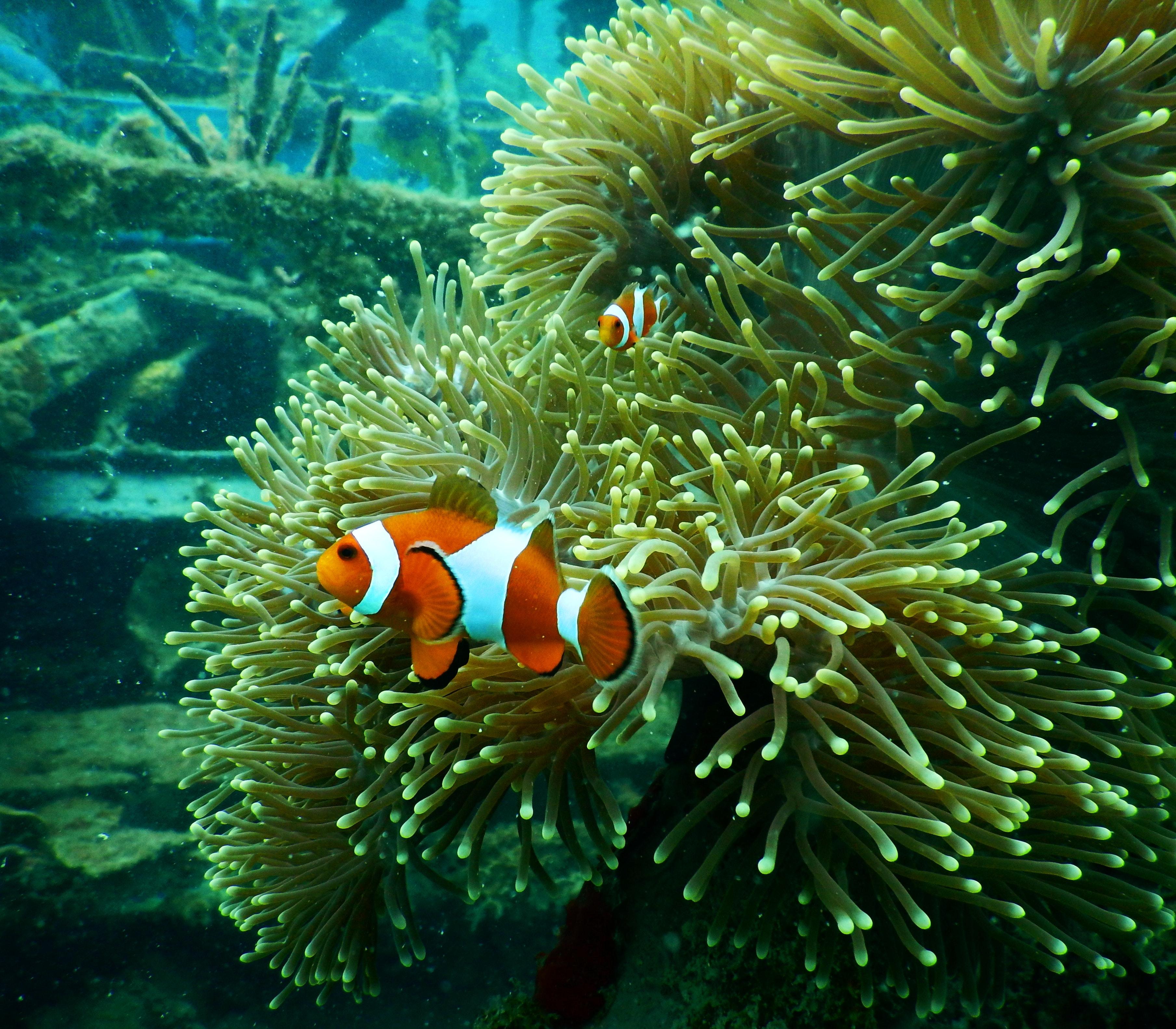 88 Koleksi Gambar Hewan Ikan Laut Gratis Terbaru