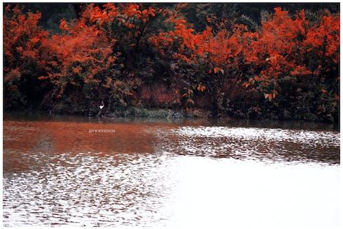 Fotos de stock gratuitas de Adobe Photoshop, cámara Nikon, fondo de pantalla de naturaleza, fotografía de naturaleza