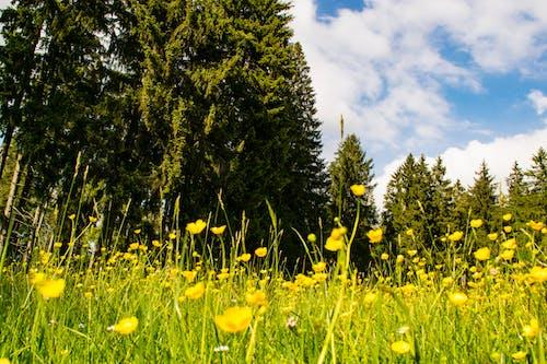 Gratis lagerfoto af bayern, bjerge, bjergudsigt, blomster
