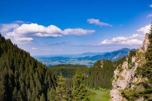 Foto d'estoc gratuïta de arbres, Fons de pantalla HD, llum del dia, muntanya